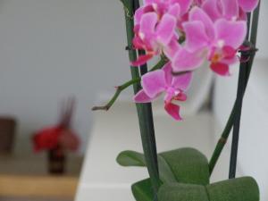 Orchidee in de praktijk